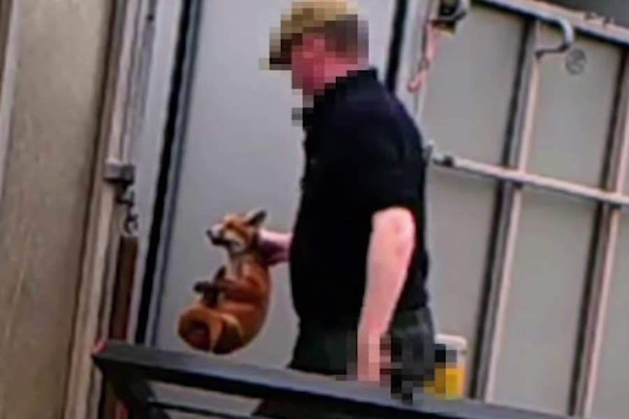 Fox cub killers escape jail