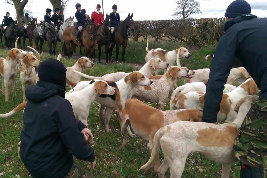 Hunt sabs and hounds