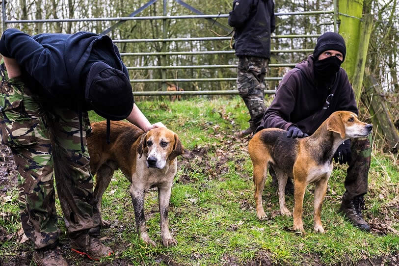 sabs and hounds