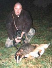 Badger and fox killed a by terrier
